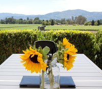 Sunflowers, Vineyards, Napa